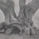 Olive tree drawn in graphite by Edith van Duin-Schermer, 2019